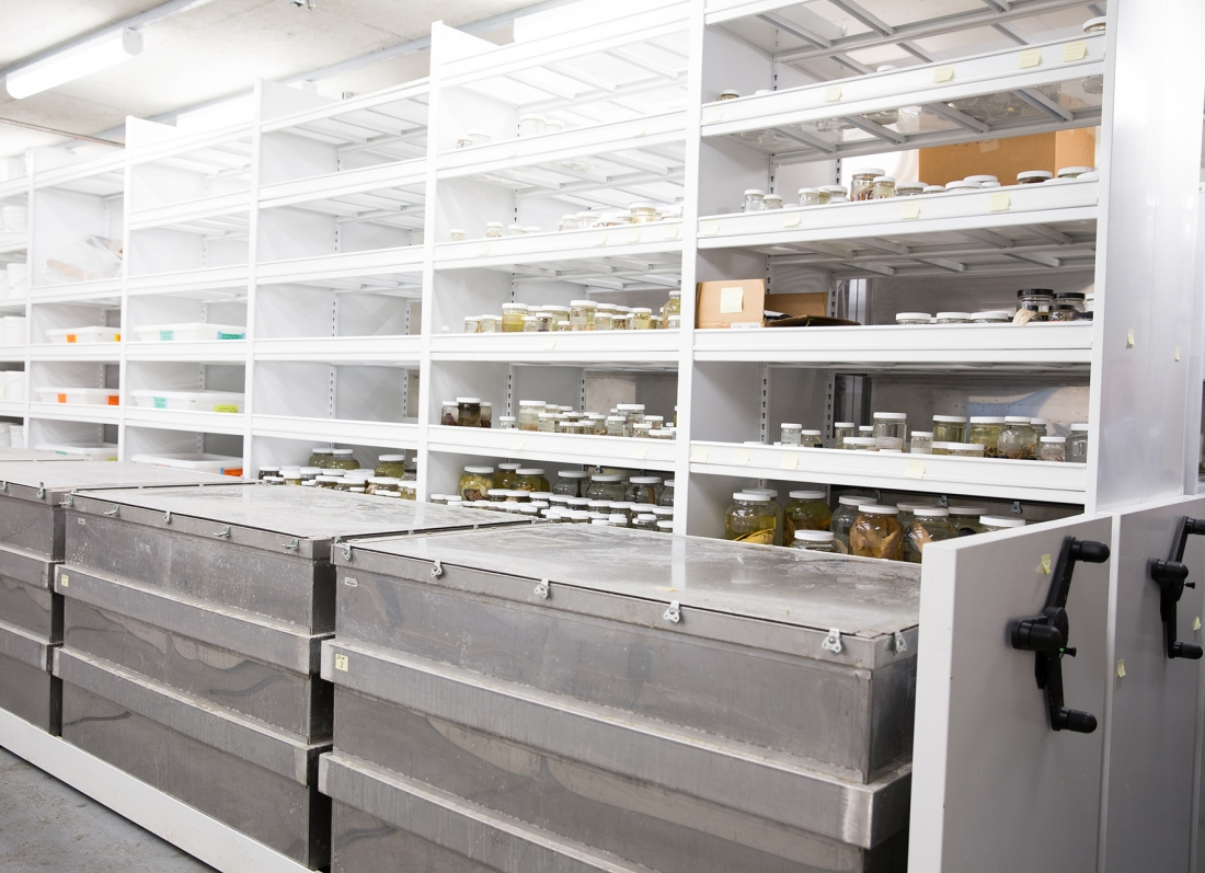 Large specimens stored in metal containers on Mechanical Assist Mobile Shelving San Francisco California