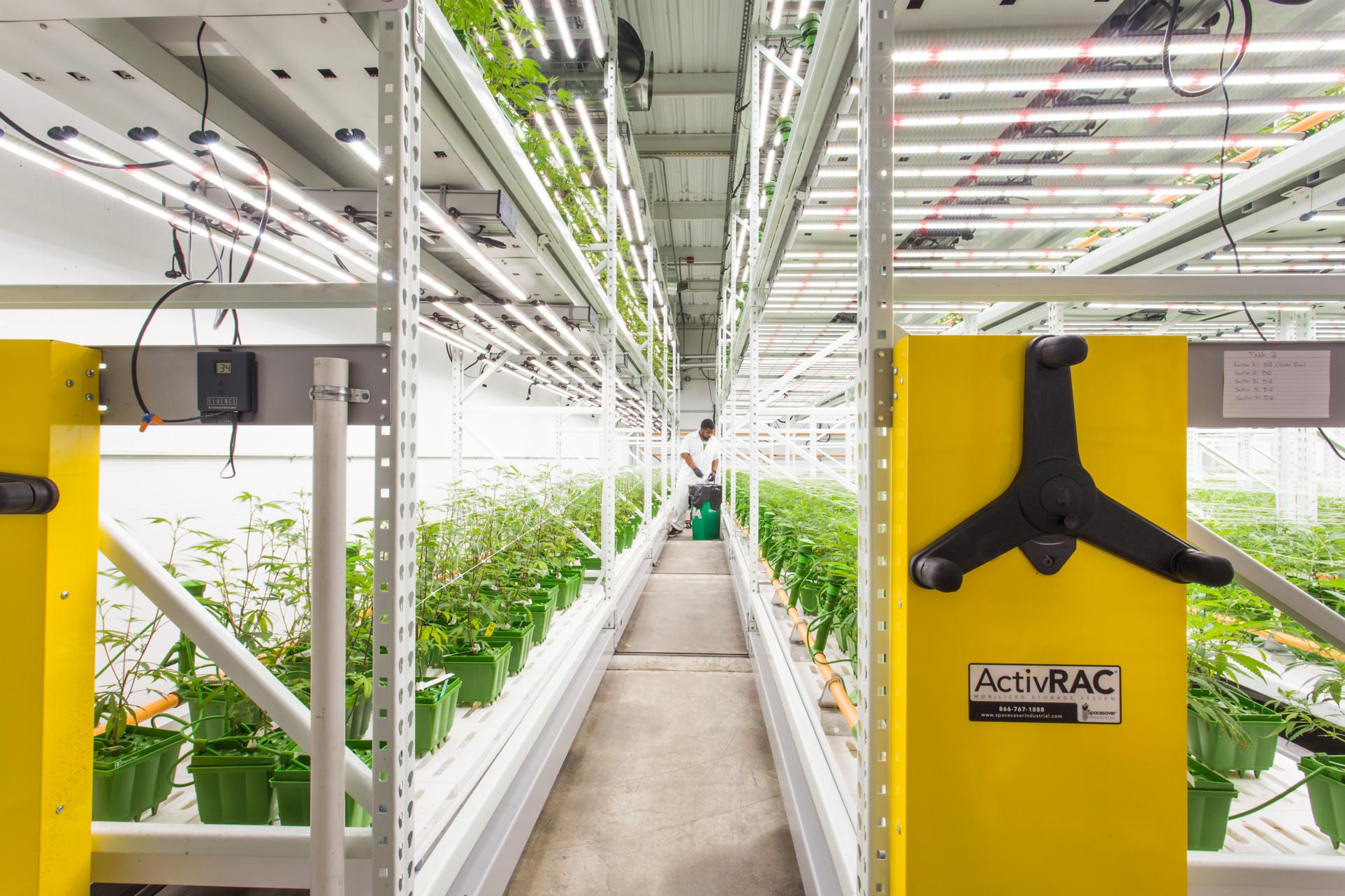 Vertical Grow Systems Indoor Farming Cannabis